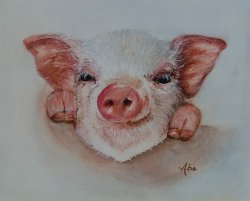 ####PIGLET    